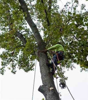 tree removal, tree lopping, tree cutting, tree surgeon.